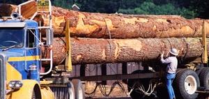 Gütertransport: Unfälle wegen ungesicherter Ladung