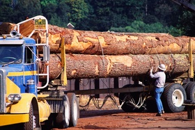 LKW Holz Ladung