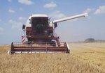 Maehdrescher auf Getreidefeld