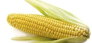 EU hat Bayer-Fusion mit dem Saatgut-Hersteller Monsanto genehmigt