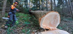 Nutzungssatz und Holznutzungen in Folge höherer Gewalt: Vordrucke