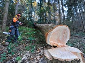 Mann mit Motorsäge hat Baum gefällt