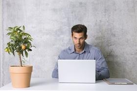 Mann sitzt in Büro an Laptop, Orangenbäumchen auf Tisch