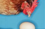 Mathematisches Denken: Das Huhn und das Ei