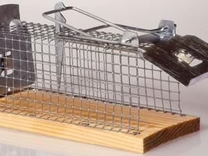 Vogelhaltung im Haftraum bei Untersuchungshaft