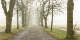 Allee im Herbst, Nebel