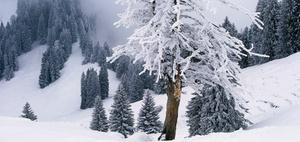 Versicherungsschutz für Frostschaden im Ferienhaus