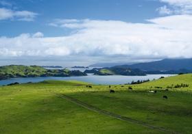Neuseeland, Nordinsel, Coromandel Halbinsel