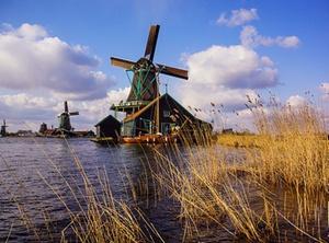 Dividendenerträge niederländische Tochtergesellschaft