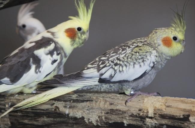mietrecht wohnung ist keine vogelstation immobilien haufe. Black Bedroom Furniture Sets. Home Design Ideas