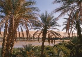 Oase, Palmen, Mandara-See, Sahara, Libyen