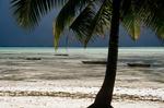 Palme und Meer