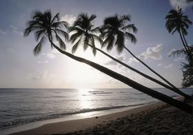 Palmenstrand, Barbados, drei Palmen, Gegenlicht