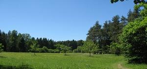 Grunderwerbsteuerliche Bemessungsgrundlage bei Waldflächen