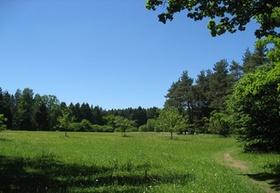 Perlacher Forst_München_Wiese_Wald