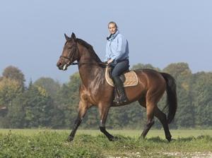 Ein Pferd die Umsatzsteuer und das Unionsrecht