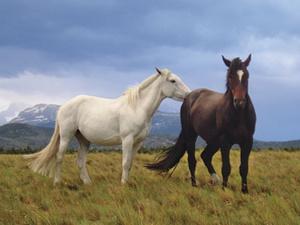 Pferdezuchtbetrieb: Keine Einheitsbewertung im Einzelertragswert