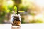 Pflanze wächst in Spardose