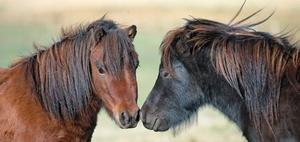 Kein Verlustausgleich bei Pferdehaltung ohne eigene Flächen