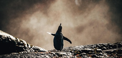 Potentialentwicklung: Was Steuerberater von Pinguinen lernen können