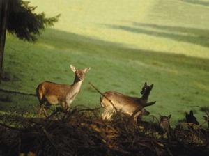 Rechtliches rund um Jagd und Waffenschein