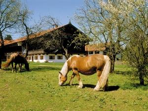 Erste Klagen gegen neue Pferdesteuer
