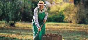 Rentner Im Minijob Was Zu Beachten Ist Sozialwesen Haufe