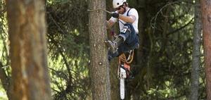 Baumfällen kann bauliche Veränderung sein