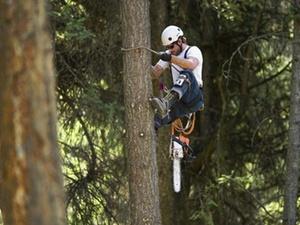 Gewinnminderung bei Holzeinschlag im Forstbetrieb