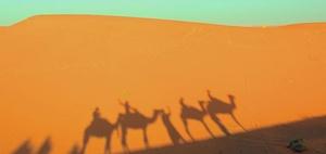 Colours of law: Kein Haustierprivileg für das Kamel