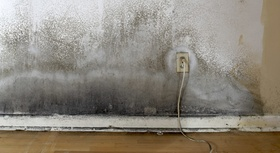 Electrical Outlet in Moldy Wall