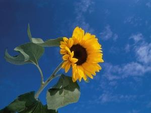 Nachhaltigkeit in Miet- und Kaufverträgen fest etabliert