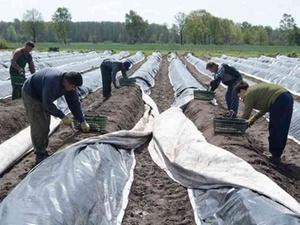 Arbeitsbedingungen: Der Preis für billige Lebensmittel