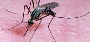 Zika-Virus: Darauf sollten Sie bei Auslandsreisen achten