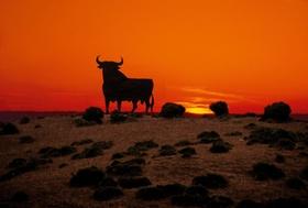 Stier vor Sonnenuntergang