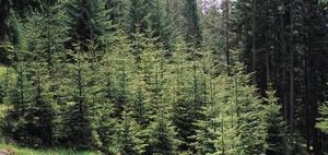 Weihnachtsbaumkulturen unterliegen nicht der Grunderwerbsteuer