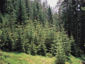 Kaufpreisaufteilung bei Veräußerung von Forstflächen