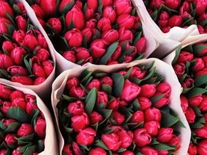 Hautgesundheit: Gepflegte Hände für Floristen