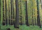 Wald (1)