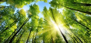 Waldinvestment: Forstimmobilien bieten gute Renditen