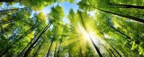 Wald Baumwipfel Sonne