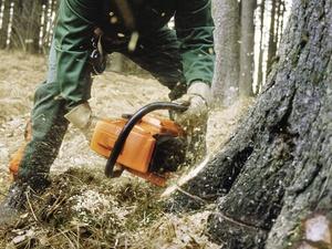 Gefährliche Berufe: Waldarbeiter