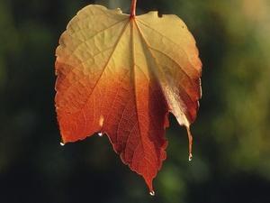 Herbstliche Stimmung in der Immobilienwirtschaft