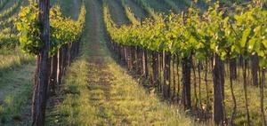 BFH Kommentierung: Wiederbepflanzungsrechte im Weinbau