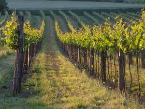 Keine Gewinnermittlung nach Durchschnittssatz für Weinbaubetrieb