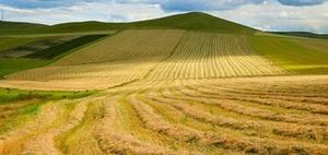 Agrarflächen via Share Deal: Für Investoren von Interesse