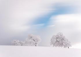 Verschneite Baeume auf dem Schauinsland, Schwarzwald, BRD